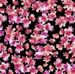 KANVAS STUDIO - Blooming Beauty - Breezy Blooms Black