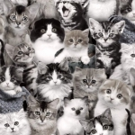 ELIZABETH'S STUDIO - Cat Breeds