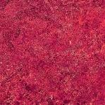 NORTHCOTT - Stonehenge Gradations - Hibiscus