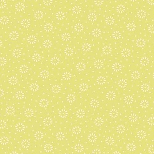 ANDOVER - Daisy - Celery