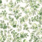 KAUFMAN - Natures Notebook - Leaf