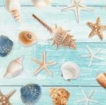 TIMELESS TREASURES - Beach - All Over Sea Shells Aqua