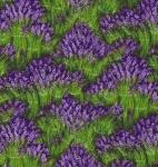 MICHAEL MILLER - Lavender