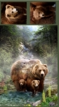 SHANNON - Grizzly Digital Cuddle - 29-pl144