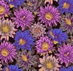 FREE SPIRIT - Kaffe Fassett Collective - Spring 2019 - Cactus Flower - Black