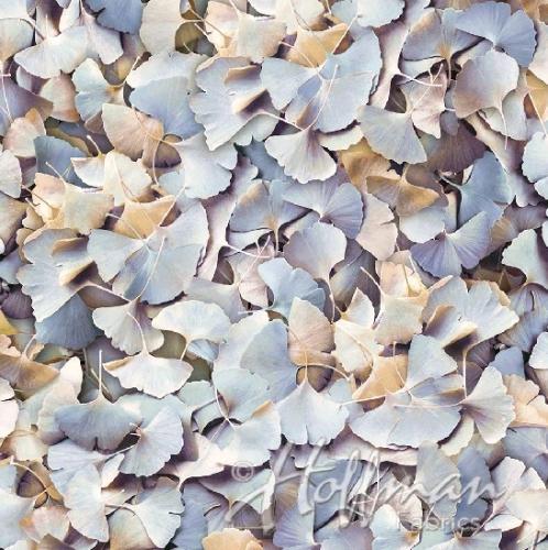 HOFFMAN - Leaf Me Be - Clouds