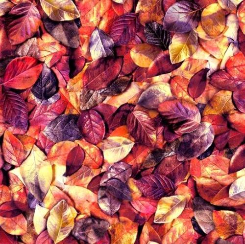 HOFFMAN - Leaf Me Be - Rum Raisin - Purple/Red/Orange