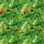 STOF - Digital Print - Petits Lapins 8 - Vert