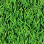 KAUFMAN - Imaginings - Grass