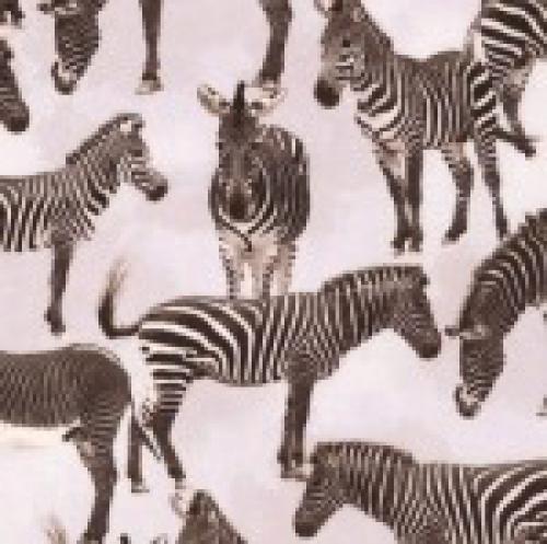 TIMELESS TREASURES - Wild - Zebras - Gray
