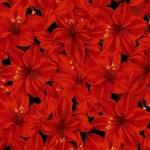 CLOTHWORKS - Holidays Remembered - Red/Black - SB363